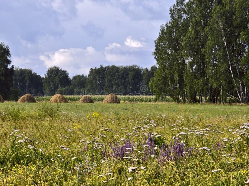 有树和干草堆的开花的草甸 免版税库存图片