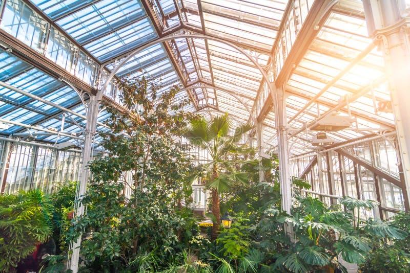 有树和棕榈丛林的热带温室  图库摄影
