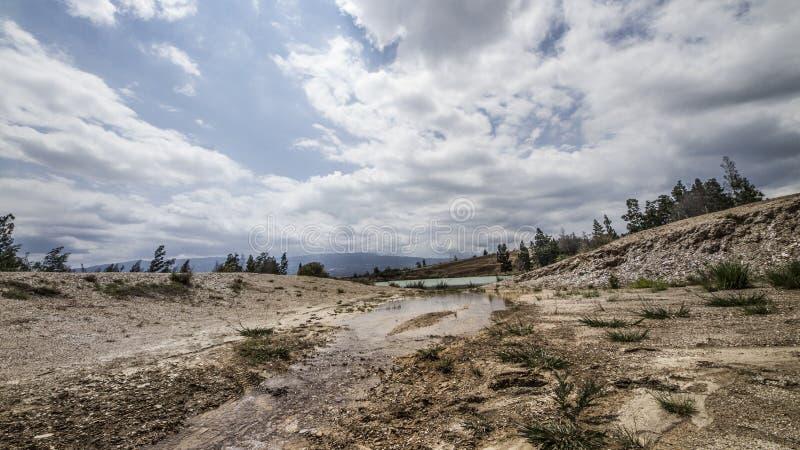 有树和棕色沙子的绿色湖 免版税库存照片