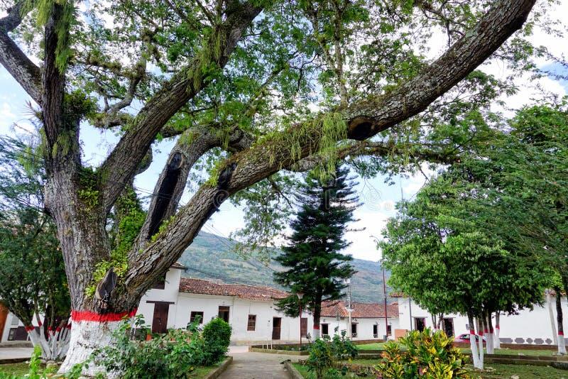 有树和殖民地议院的公园在瓦尔de圣荷西,哥伦比亚 库存照片