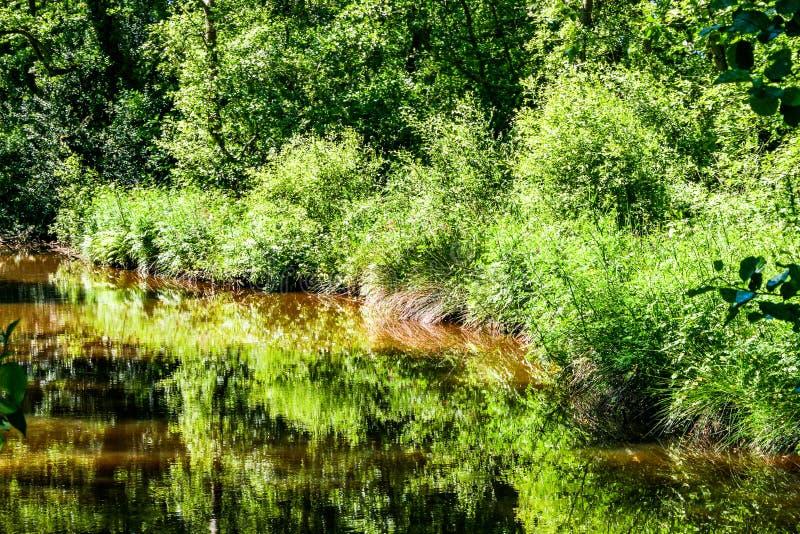 有树和灌木的湖 免版税库存图片