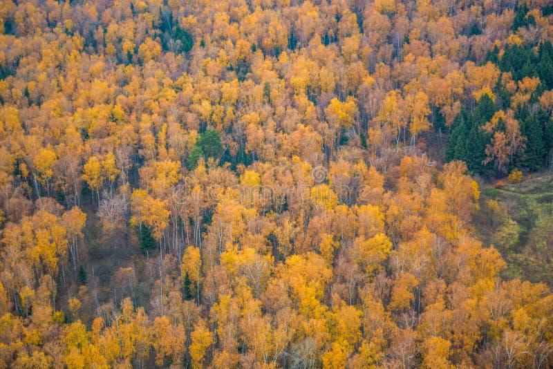 有树和金黄叶子的秋天森林 空中秋天风景 库存图片