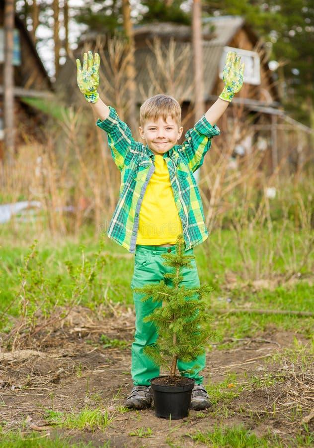 有树幼木的愉快的小男孩 免版税库存图片