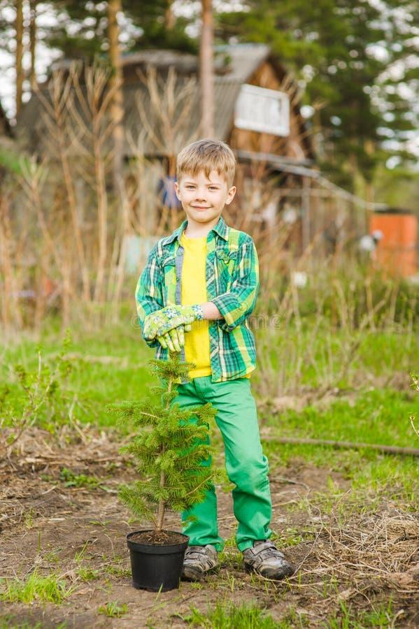 有树幼木的愉快的小男孩 库存照片