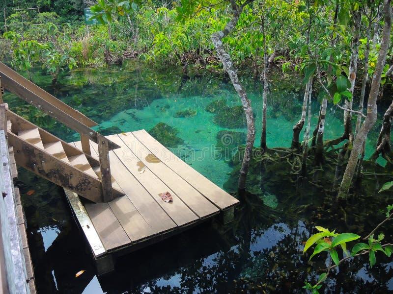 有树森林根和木楼梯江边的美丽的清楚的绿色水湖在Krabi,泰国国家公园 库存照片