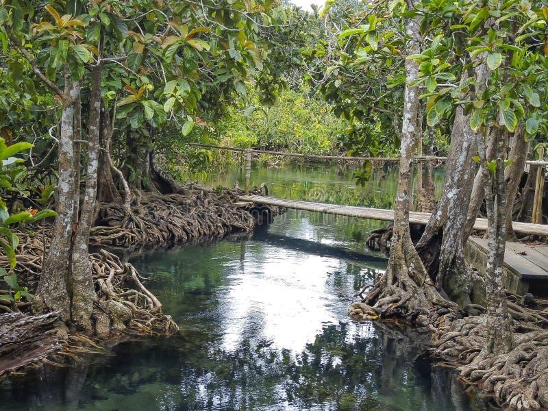有树森林的美丽的绿色水湖于Krabi,泰国国家公园根源 免版税库存照片