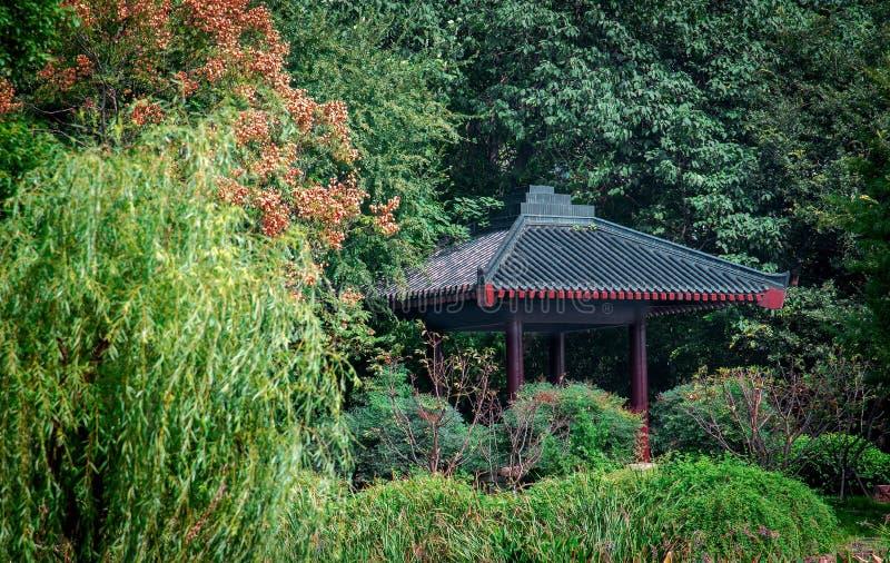 有树的中国风格亭子在庭院里 免版税库存照片