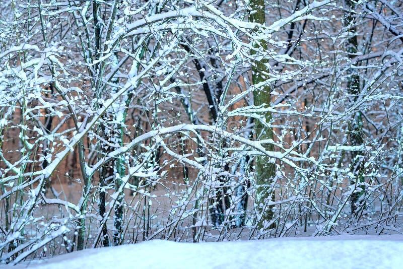 有树的冬天森林 森林自然风景冷的天 锡 免版税图库摄影