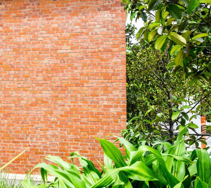 有树的橙色砖墙在公园 免版税库存照片