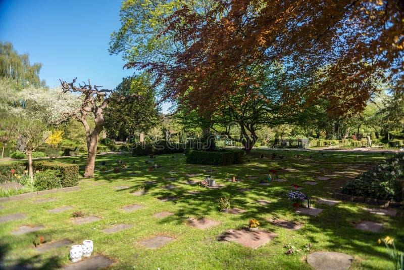 有树的绿色草坪在植物园里  免版税库存照片
