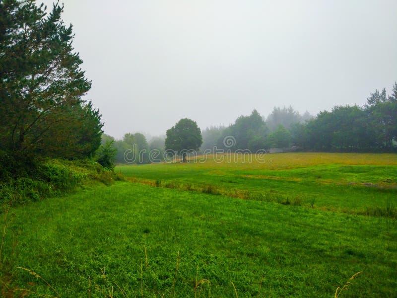 有树的绿草草甸在一有雾的天 camino de圣地亚哥 免版税图库摄影