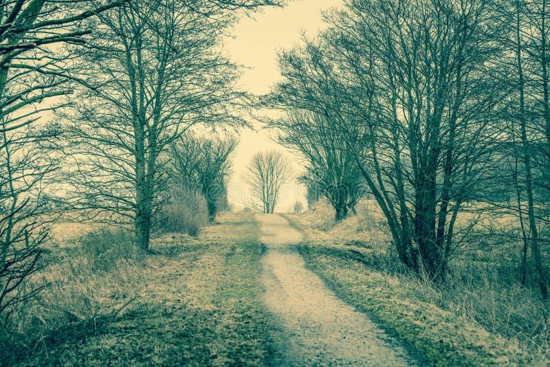 有树的自然道路 免版税库存照片
