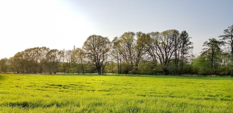 有树的草甸 免版税库存照片