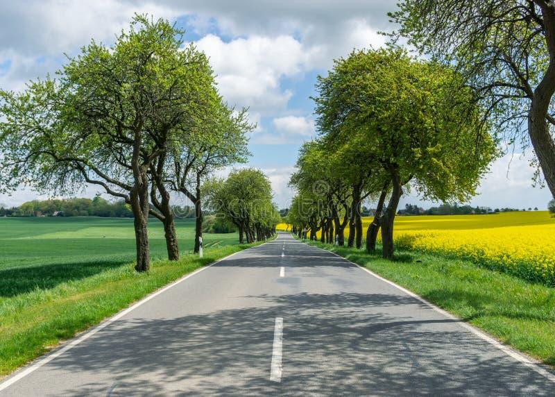 有树的路在乡下 免版税图库摄影