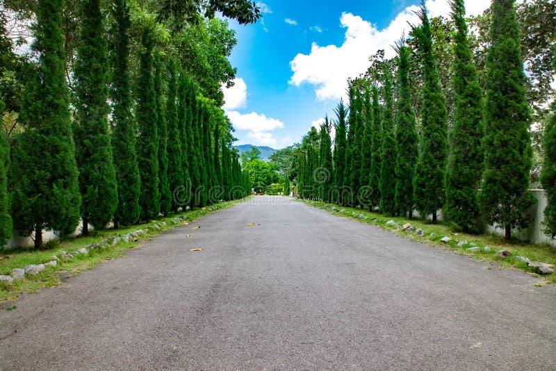 有树的路沿路 免版税库存图片