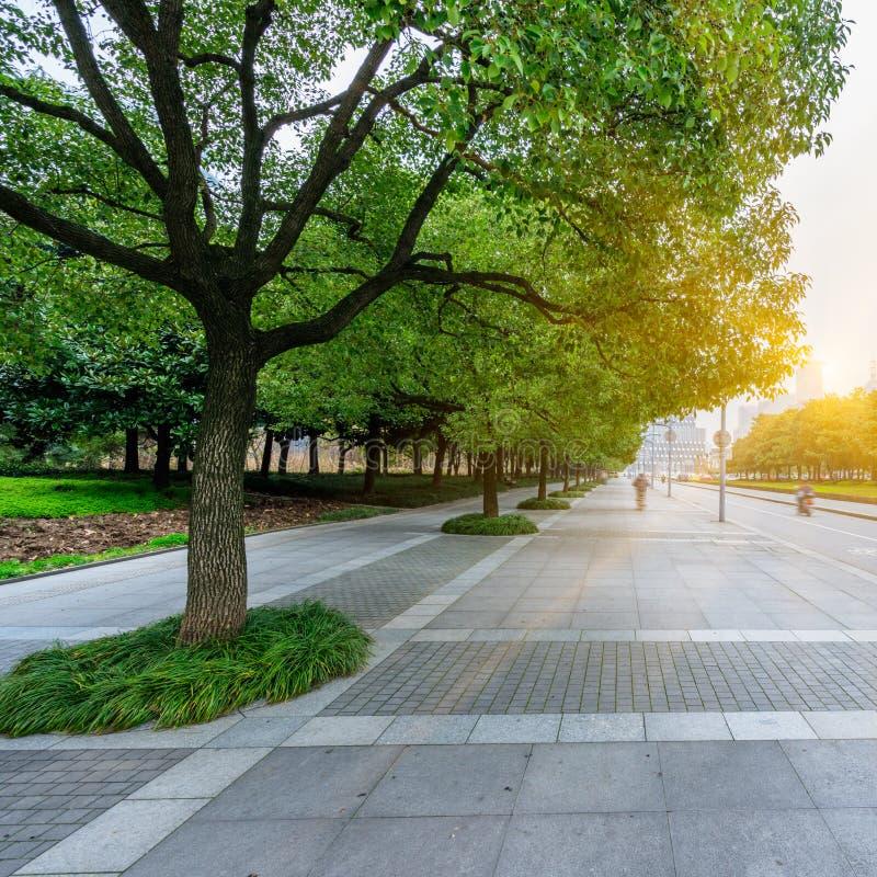 有树行的都市街道在边路的 免版税库存照片