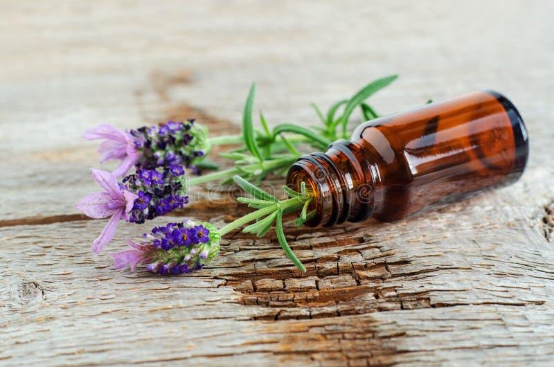 有根本熏衣草油的小瓶 熏衣草属花关闭  芳香疗法、温泉和草药成份 免版税库存图片