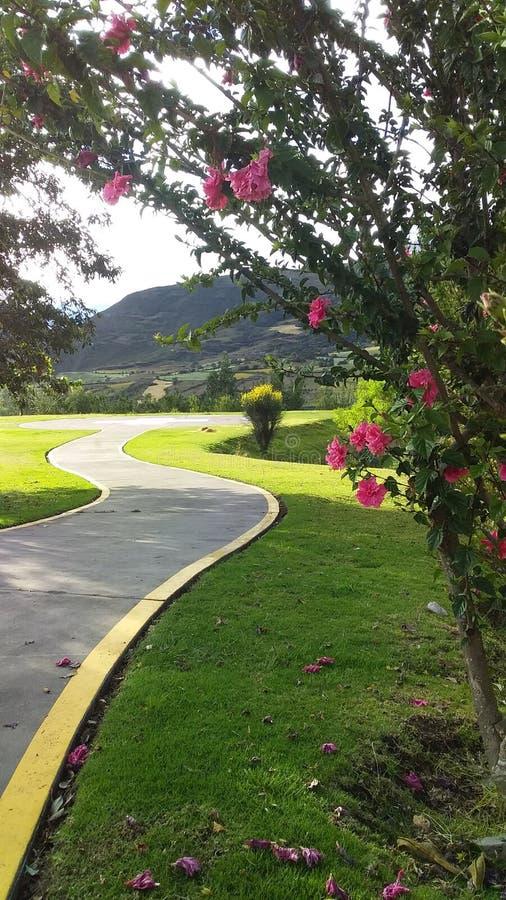 有桃红色花的布什在向山的一条路旁边 库存照片