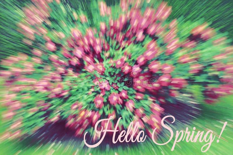 有桃红色花的布什在绽放作为背景 库存图片