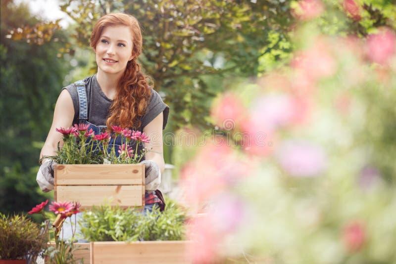 有桃红色花的条板箱 免版税图库摄影