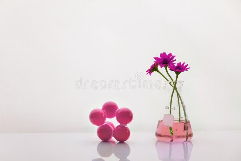有桃红色花的玻璃烧瓶与化学结构有白色生物工艺学科学背景 库存照片