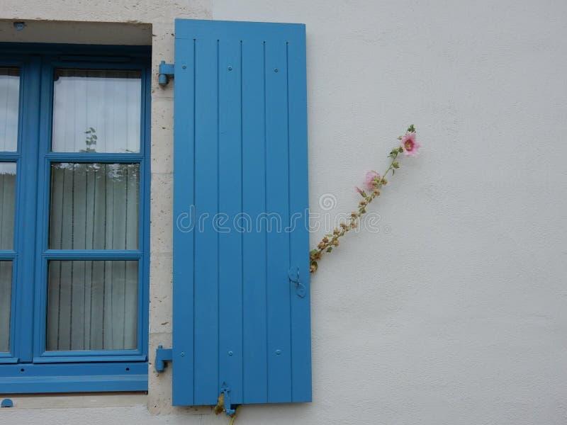 有桃红色花的蓝色窗口快门 免版税图库摄影