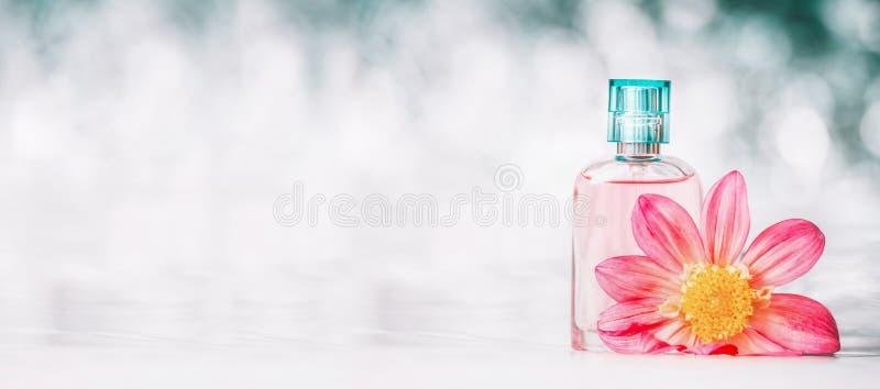 有桃红色花的香水瓶在bokeh背景,正面图,横幅 秀丽和香料厂 免版税库存图片
