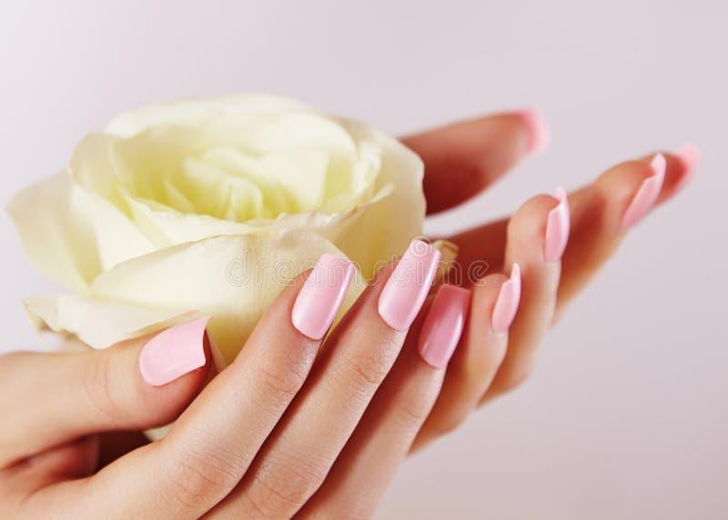 有桃红色被修剪的钉子的典雅的女性手 拿着玫瑰色花的美丽的手指 与光波兰语的柔和的修指甲 免版税库存图片
