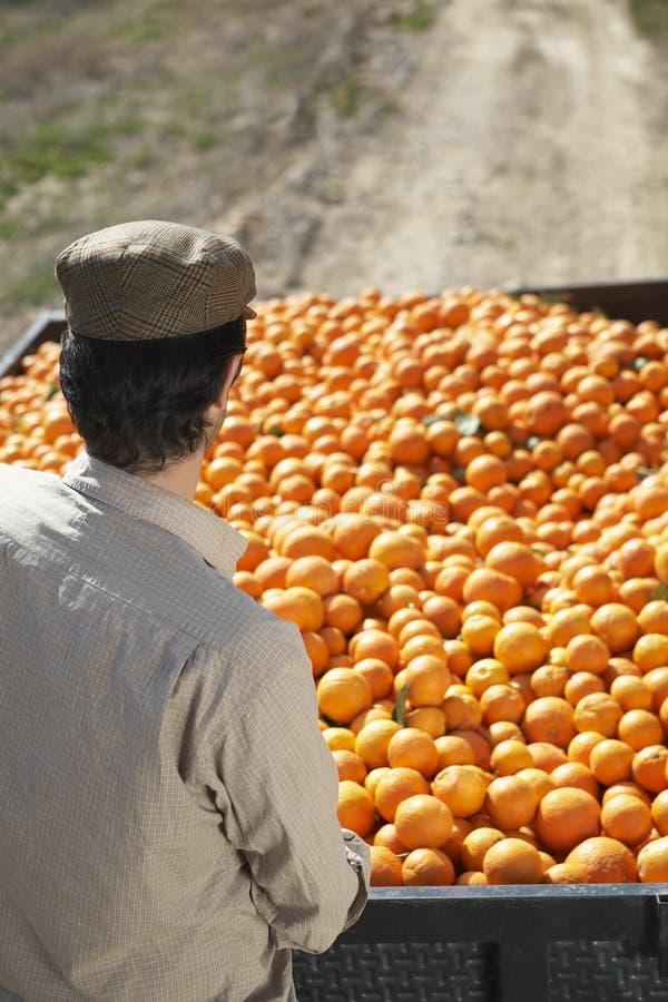 有桔子拖车的农夫在领域 免版税库存图片