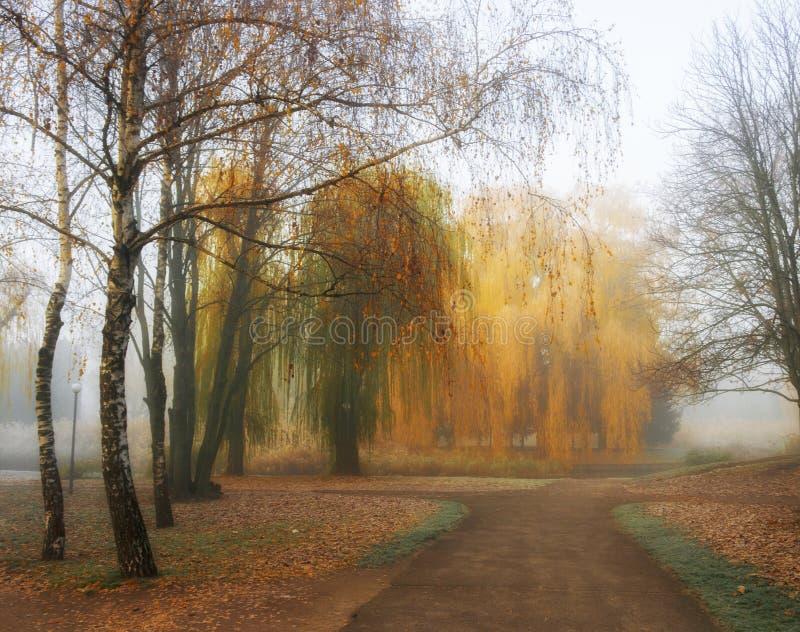 有桦树的胡同和垂柳在秋天公园 有薄雾的有雾的秋天天 库存图片