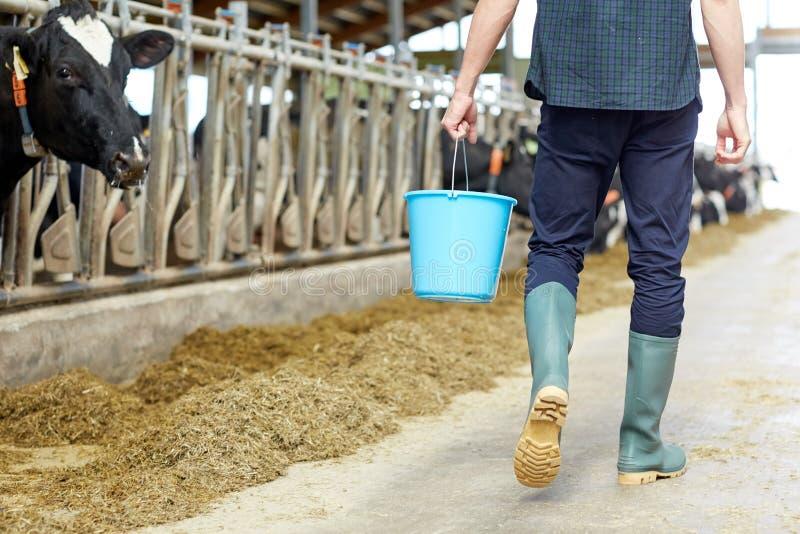 有桶的人走在奶牛场的牛棚的 免版税图库摄影