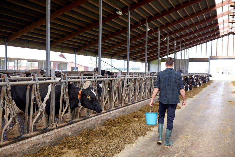 有桶的人走在奶牛场的牛棚的 免版税库存照片