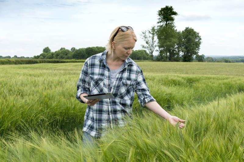 有检查巨大的领域的片剂计算机的夫人麦子厂 免版税库存照片