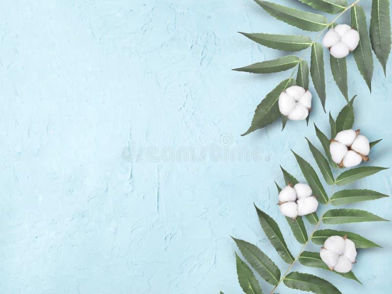 有棉花的异乎寻常的叶子在浅兰的织地不很细背景 库存图片