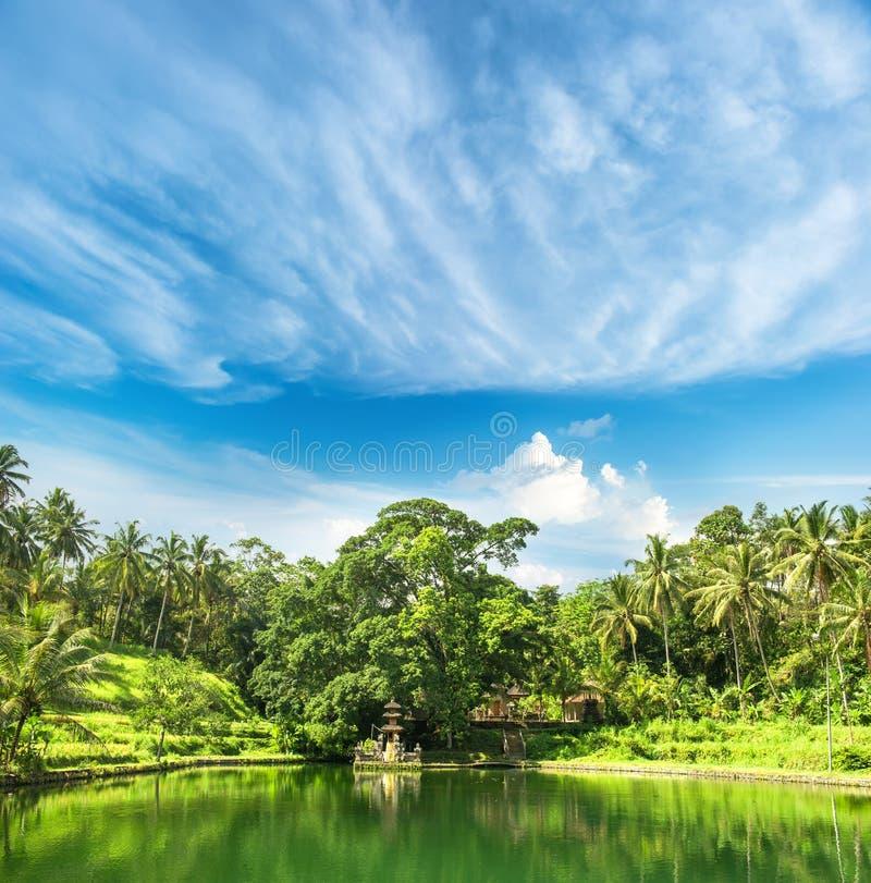 有棕榈树和蓝天的Paradise湖 热带自然土地 库存照片
