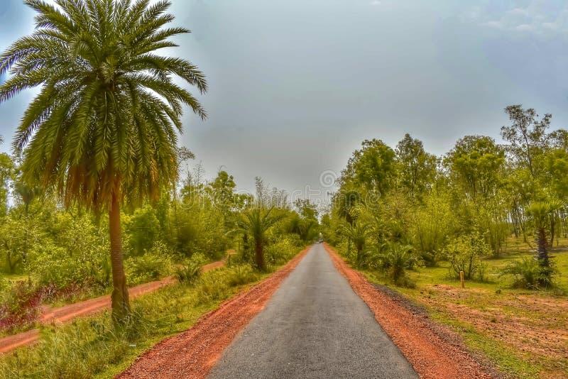 有棕榈树和豪华的绿叶的不尽的路 库存照片