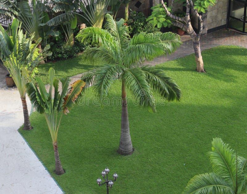 有棕榈树的一个热带公园 免版税库存照片