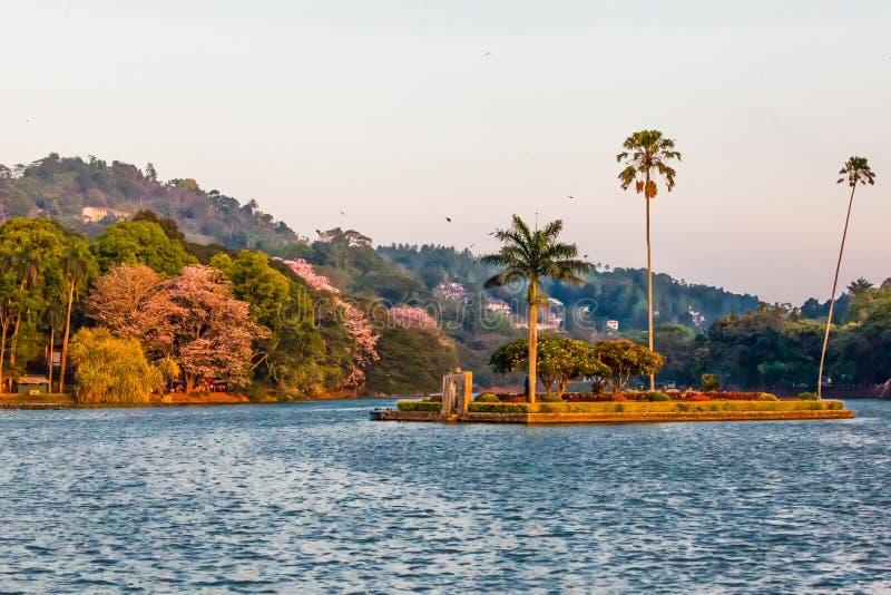 有棕榈树的小海岛在Kandy湖中间 库存图片