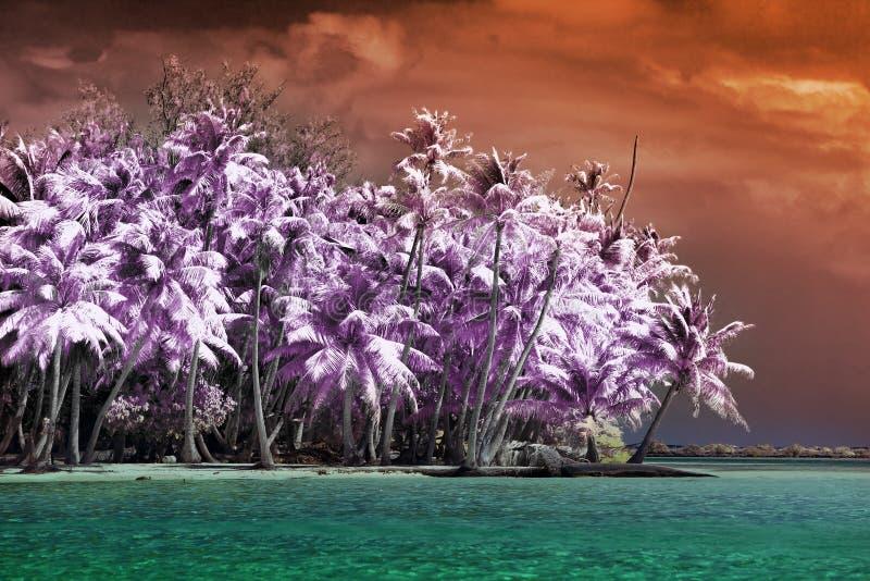 有棕榈树的海岛向海,一张红外照片 免版税库存照片
