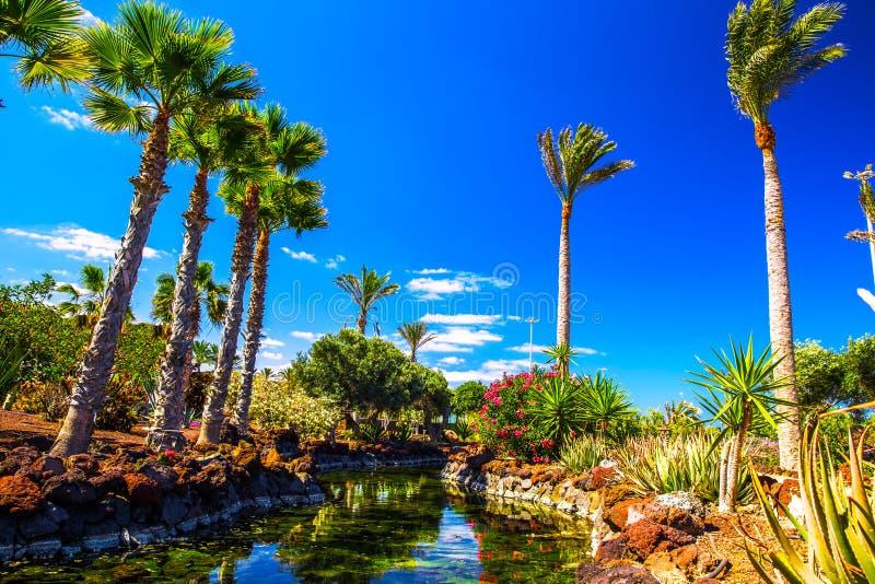 有棕榈树的热带海岛度假村庭院在费埃特文图拉岛,加那利群岛,西班牙,欧洲 库存图片
