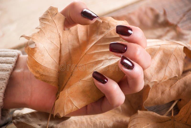 有棕色胶凝体指甲油的妇女手拿着在木的干燥秋天叶子并且离开 免版税库存照片
