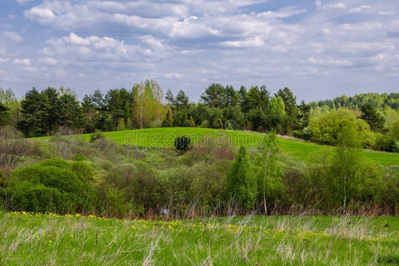 有森林传送带的多小山绿色草甸和灌木在多云天空下 库存图片