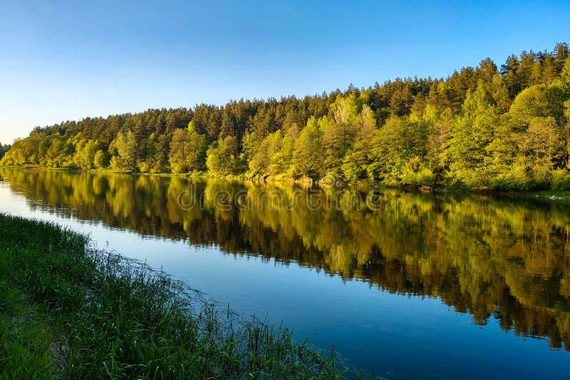 有森林的,树的反射美丽的河在水,水的光滑的镇静表面中没有波浪的 库存照片