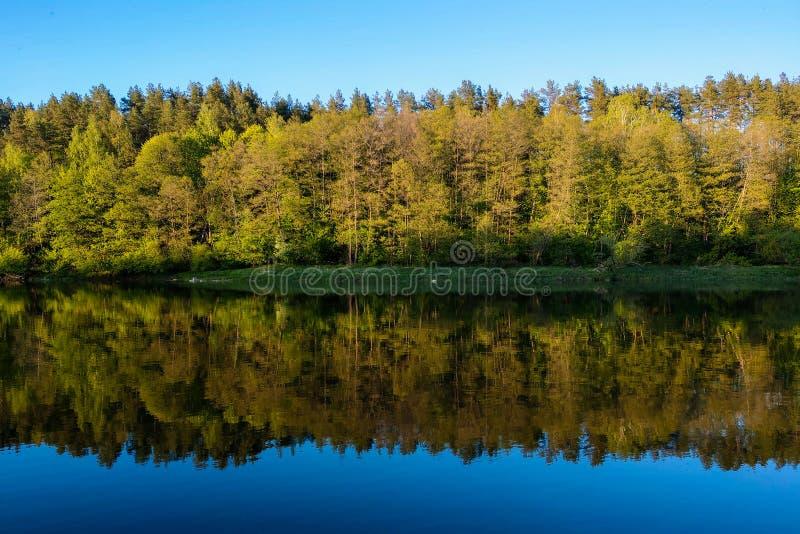 有森林的,树的反射美丽的河在水,水的光滑的镇静表面中没有波浪的 免版税库存图片