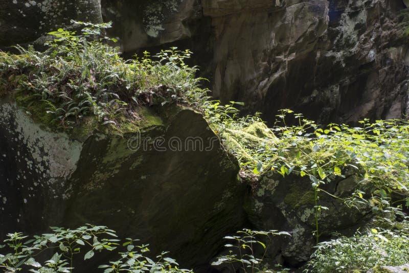 有植物和藤的岩石墙壁 免版税库存图片