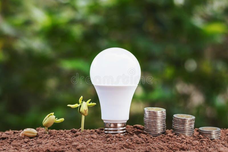 有植物生长的电灯泡和在土壤的金钱堆 cocept sav 免版税库存照片