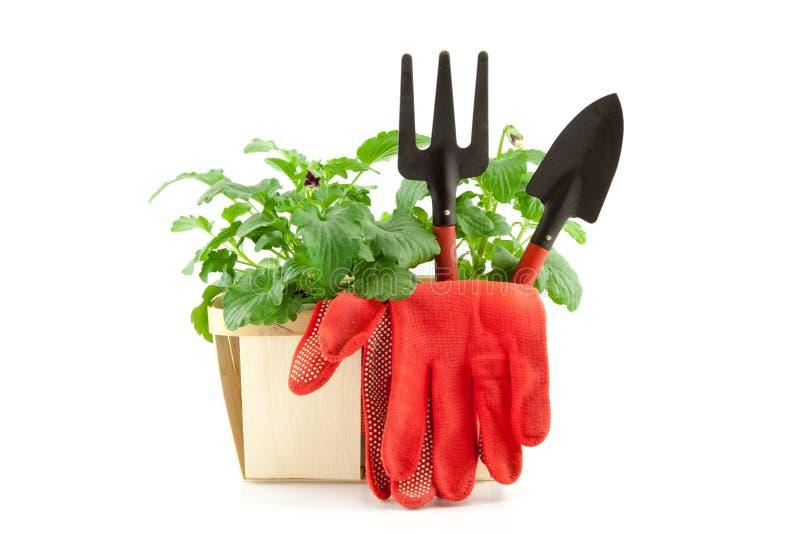 有植物的园艺工具白色背景的 免版税库存照片