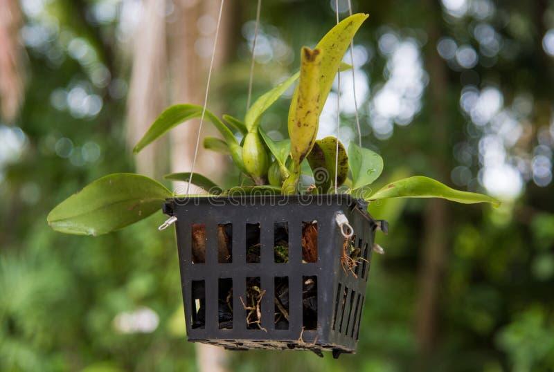 有植物的罐 免版税库存照片