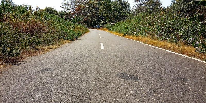 有植物的高速公路 免版税库存照片