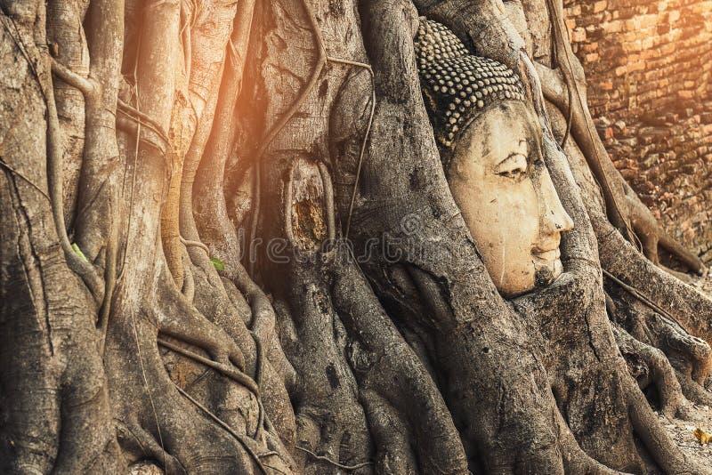 有榕树根的著名菩萨头在佛教寺庙Wat 库存图片